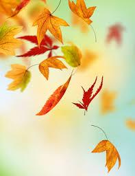 falling leaves portrait