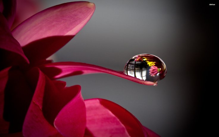 daisy-petal-water-drop