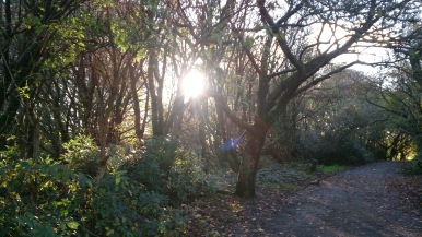 Sunlight in the woodland
