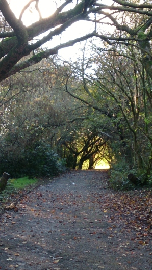 Typical of Heaton Park - lots of pathways through woodland