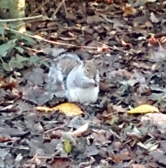 Couldn't resist this little fella. How tubby is this squirrel?!